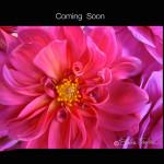 coming-soon-ART-PRINT-FLAT-LR1